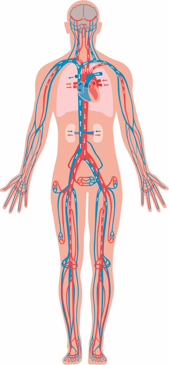 Hypertonie Grad 1 | BlutdruckDaten-Lexikon