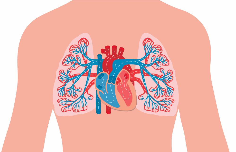 Lungenkreislauf