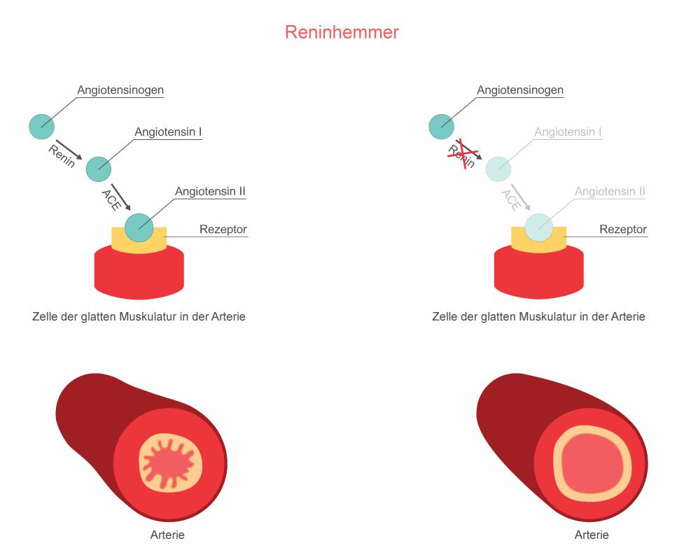 Wirkungsweise Renin-Hemmer