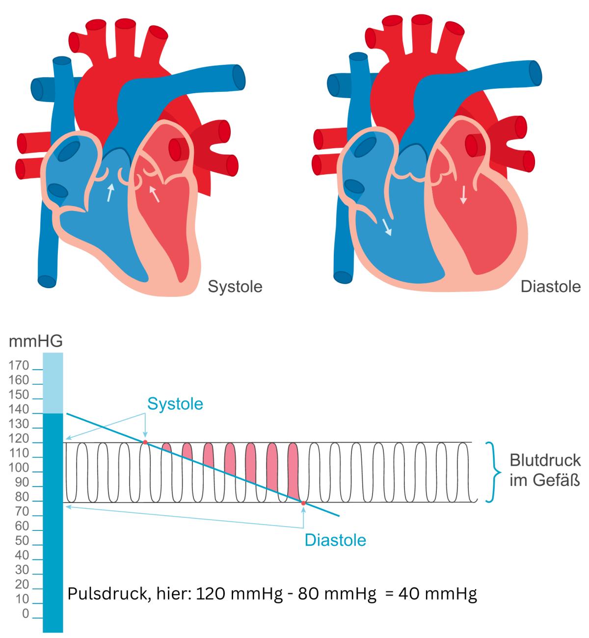 Diastolischer Blutdruck | BlutdruckDaten-Lexikon